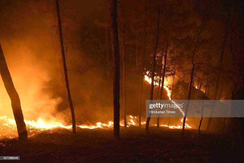 Forest fire on May 2, 2016 in Ranikhet, India. According to the centre, more than 2,000 hectares of forest have been devastated. There are 200 fires still raging in the state, suggest satellite pictures. Besides the 6,000 firefighters, personnel of the National Disaster Response Force or NDRF, the Army and the Air Force are working to douse the fires.