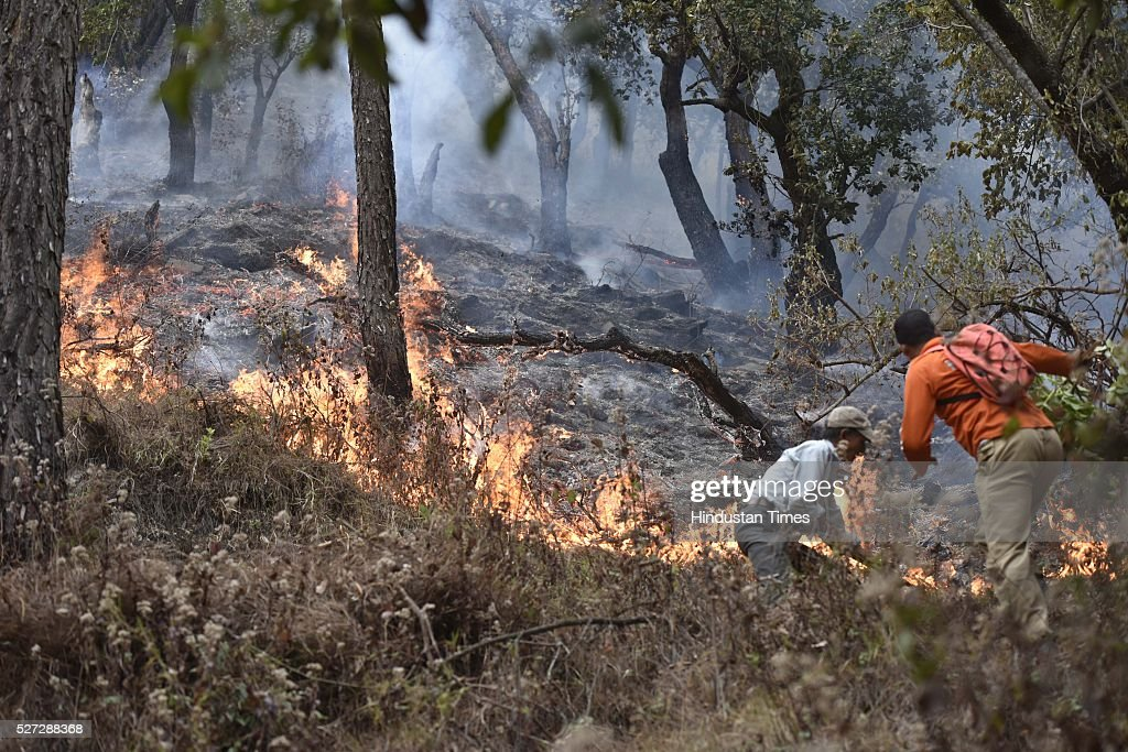 NDRF personnel douse the flames and conduct rescue operation at Manan Village on May 2, 2016 in Almora, India. According to the centre, more than 2,000 hectares of forest have been devastated. There are 200 fires still raging in the state, suggest satellite pictures. Besides the 6,000 firefighters, personnel of the National Disaster Response Force or NDRF, the Army and the Air Force are working to douse the fires.