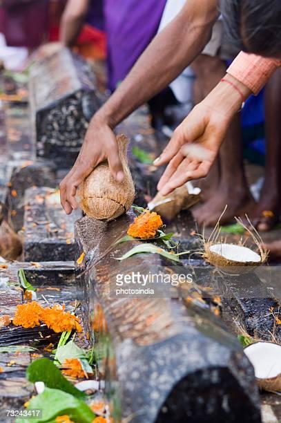 Person's hand breaking a coconut in a temple, Tirupati, Andhra Pradesh, India