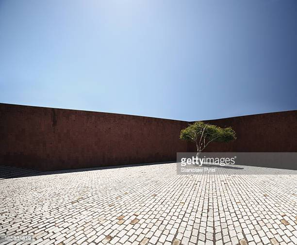 Perspective view on square with tree and wall