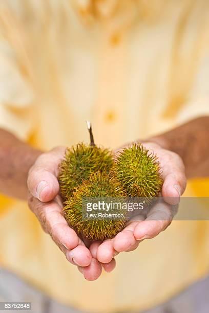 Peruvian man holding Achiote Fruit