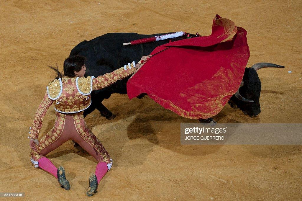 Peruvian matador Andres Roca Rey performs a pass on a bull during the Corpus bullfight festival at a Granada bullring on May 27, 2016. / AFP / JORGE