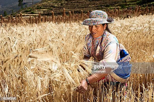 Peruanische Frau in-Kleidung ernten rye, Colca Canyon