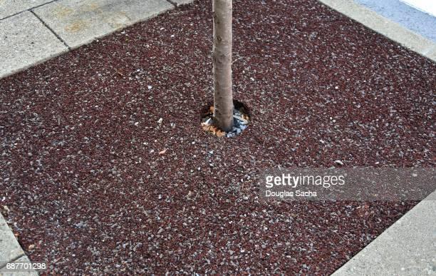 Pervious Pavement surrounding a sidewalk tree truck