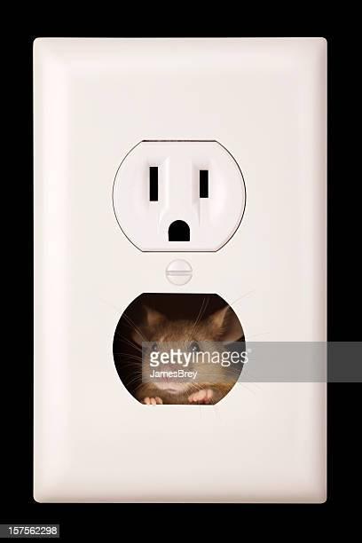 Pesky rato vivem na tomada eléctrica