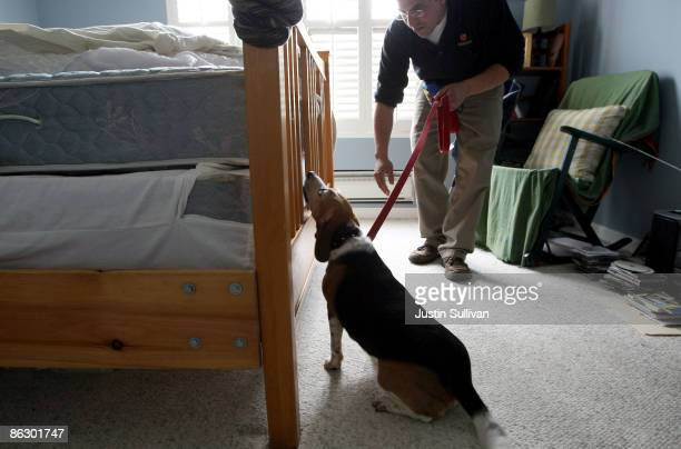 Pestec technician Carlos I Agurto walks with Ladybug a Beagle trained to sniff out bed bugs as they inspect a bed in an apartment with bed bugs April...