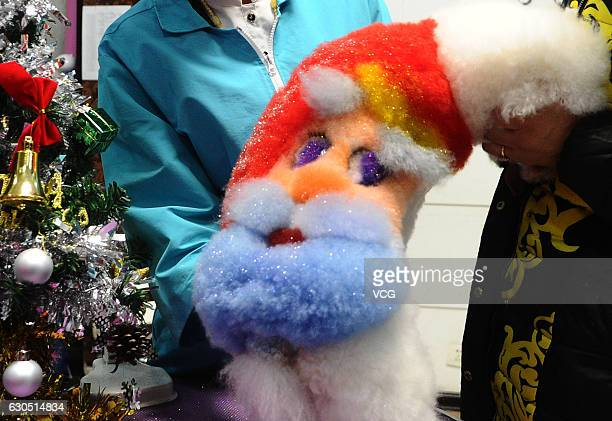 A pet beauty training school shows a bichon frise painted with a Santa Clause on the back on December 24 2016 in Dalian Liaoning Province of China A...