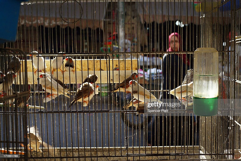Pet birds sit in a cage in a market of a poor neighborhood with a high concentration of Syrian refugees on June 27, 2013 in Beirut, Lebanon. Currently the Lebanese government officially hosts 546,000 Syrians with an estimated additional 500,000 who have not registered with the United Nations. Lebanon, a country of only 4 million people, is now home to the largest number of Syrian refugees who have fled the conflict. The situation is beginning to put a huge social and political strains on Lebanon with no end in sight to the war in Syria.