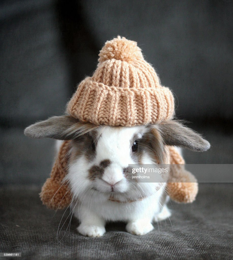 Pet bunny wearing knit hat in autumn