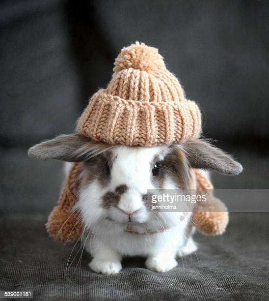 Pet bunny wearing wool hat