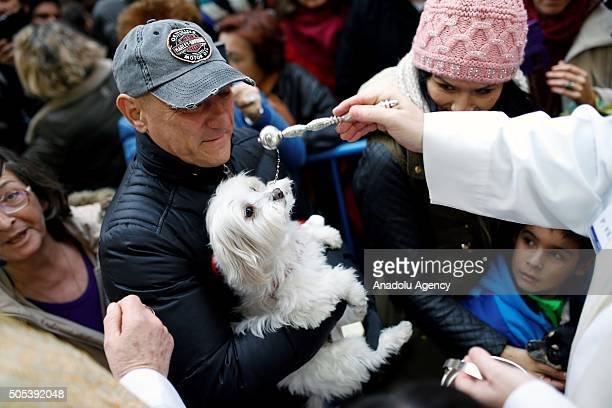 A pet dog is being blessed by a priest at San Anton Church in Madrid Spain on Saint Anthony's day dedicated to the animals by Spanish Christians on...