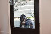 Pet dog looking through back door window