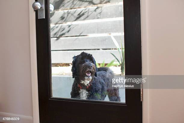 Pet dog looking through back door window