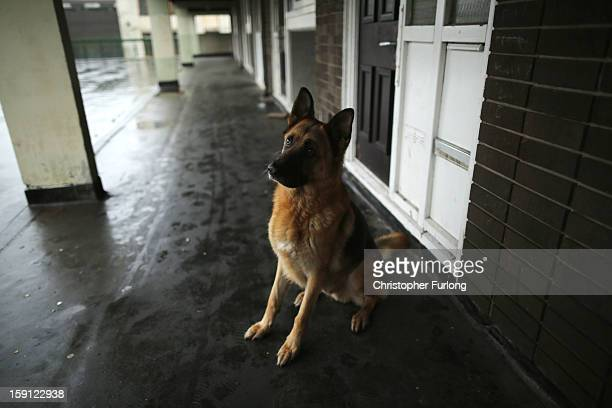 A pet dog named Jack sits outside his owners' home on the Falinge Estate which has been surveyed as the most deprived area in England for a fifth...