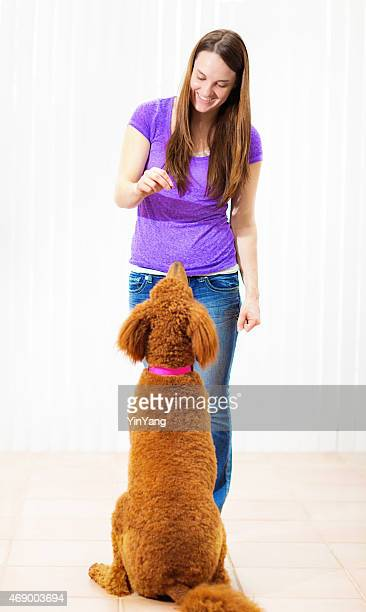 Pet Dog Training School, Woman Teaching Standard Poodle