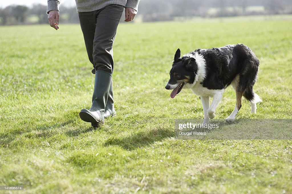 Pet dog walking with owner in countryside : Stock Photo