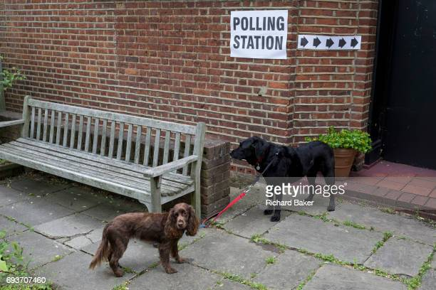 Pet dogs await their voting owners for the UK 2017 general elections outside the polling station at St Barnabas Parish Hall in Dulwich Village on 8th...
