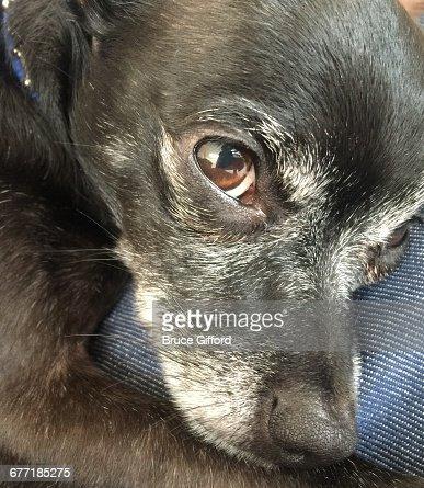 Pet Extreme Close-ups