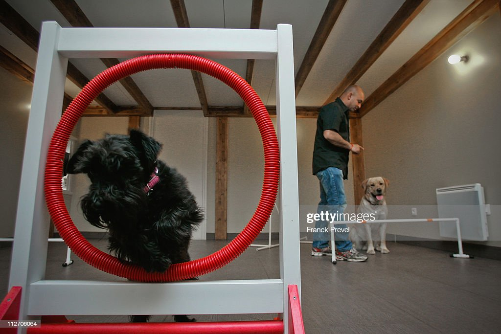 Pet hotel owner Stan Burun excercises resident dogs at Actuel Dogs on April 19, 2011 in Vincennes, France. Opened in November 2010 by Devi and Stan Burun, Actuel Dogs is a five-star luxury hotel for dogs with four single rooms and two suites. With the aim of meeting the dogs' needs, the hotel offers activities including doggy walks, doggy rando'(hiking), doggy jogs, doggy velo'(running next to a bike) and other services such as dog massage. The hotel also caters to the needs of people living in small appartments or who don't have the time to walk their dogs.