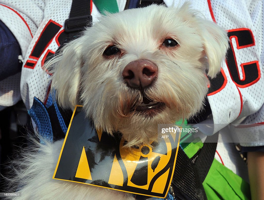 A pet is dressed with a protest sign during an anti-nuclear demonstration in front of the presidential office in Taipei on March 9, 2013. Tens of thousands of Taiwanese people rallied in the capital on March 9 to demand the government heed the lesson of a Japanese atomic crisis and scrap the island's nuclear facilities, organisers said. AFP PHOTO / Mandy CHENG