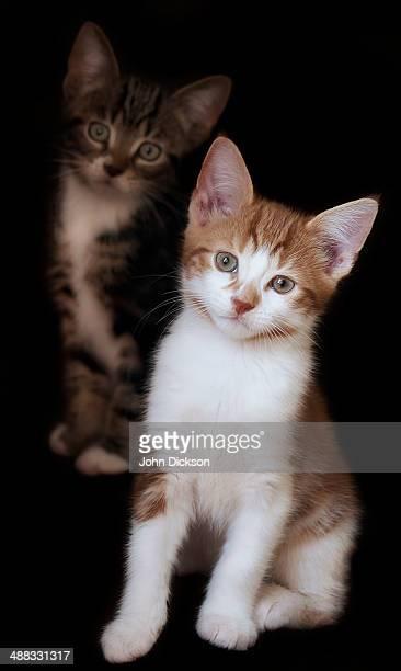 Pet Kittens
