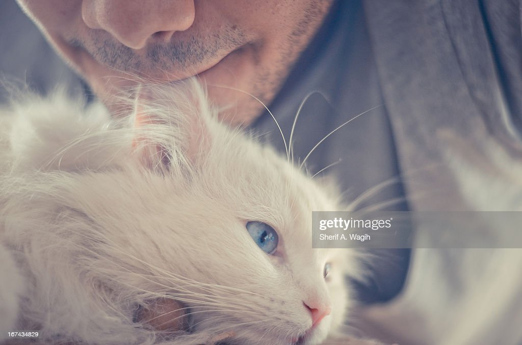 Pet love : Foto de stock