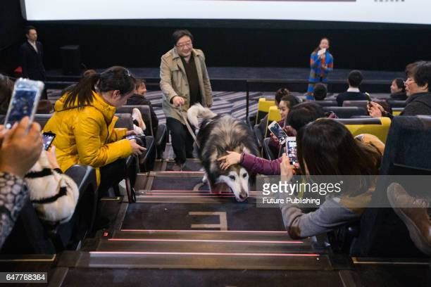 Pet lovers take photos of a tenyearold Alaskan Malamute named Berry coming for a movie about a pet dog in a cinema on March 03 2017 in Hangzhou China...