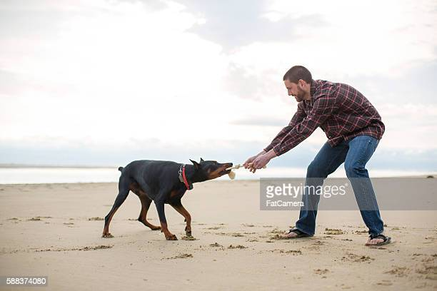 Pet owner playing tug of war with his dog