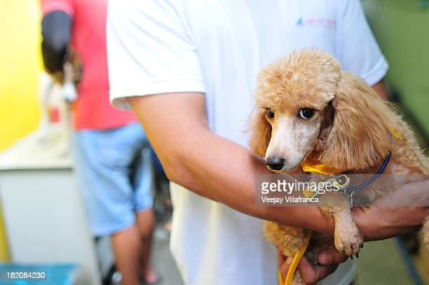 Pet owners carry their dogs during the parade as they participate in a parade on World Rabies Day on September 28 2013 in Cainta Municipality...