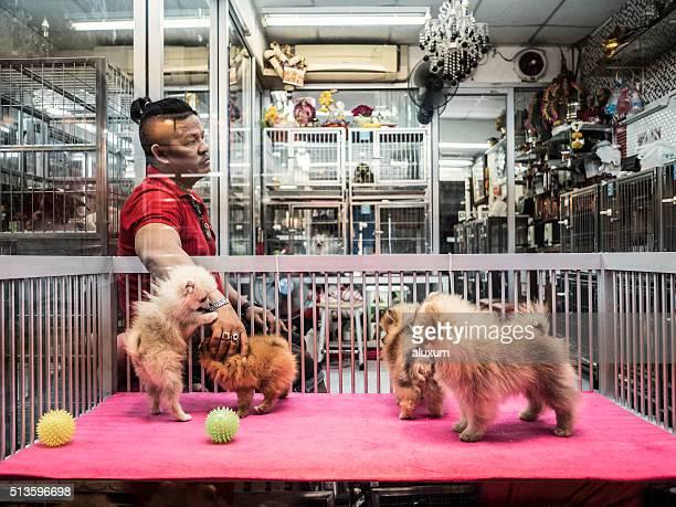 Loja de Animais de estimação em Chatuchak mercado, Banguecoque, Tailândia