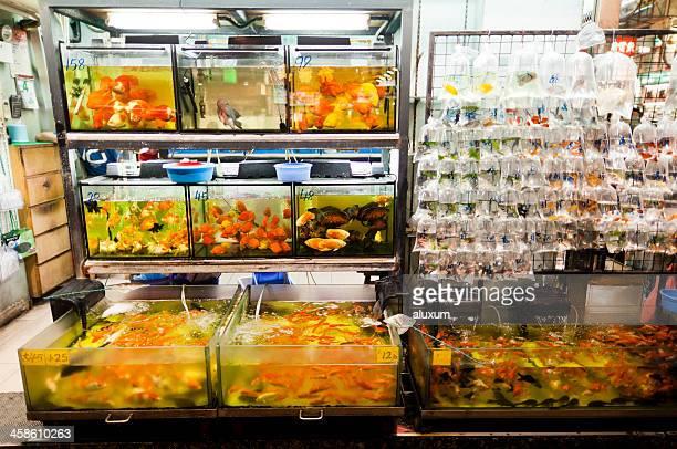 Loja de Animais de estimação em Hong Kong