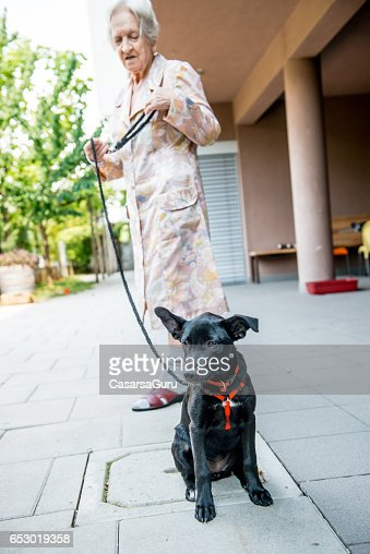 Pet Therapy - Senior Woman In The Retirement Home Taking Dog Out : Stock-Foto