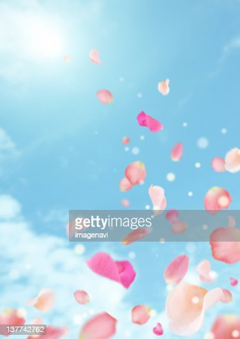 Petals flying over blue sky