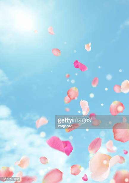 Petals flying over blue sky