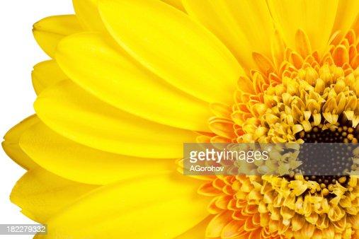 Petals : Stock Photo