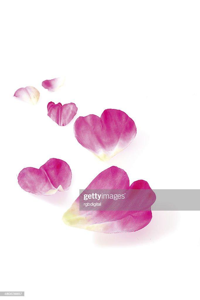 Petals : Stockfoto