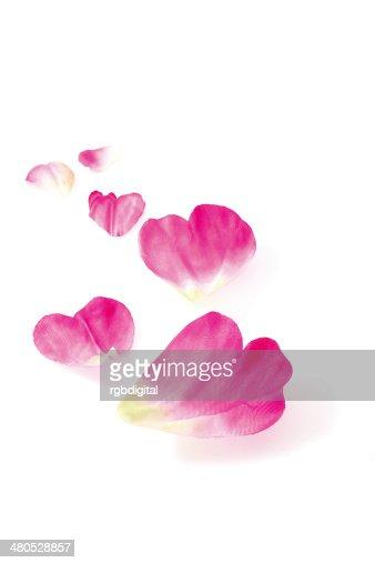 Blütenblätter : Stock-Foto