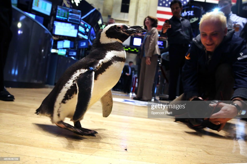 'Pete the Penguin' of SeaWorld Entertainment walks on the floor of the New York Stock Exchange on January 15, 2014 in New York City. The Dow rallied for a second straight day closing up 108 points. SeaWorld Entertainment rang the Closing Bell for the day.