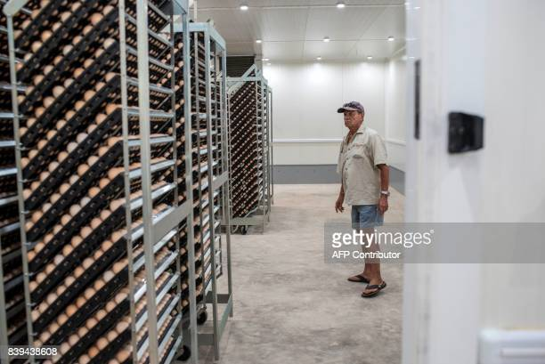 Peter Crouch manager at the Valentine Chicken Hatchery inspects eggs before they are moved to the incubation rooms for hatching on July 11 2017...