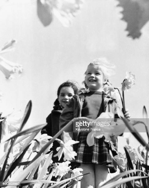 Petites filles dans un champ de fleurs en Hollande le 15 avril 1964
