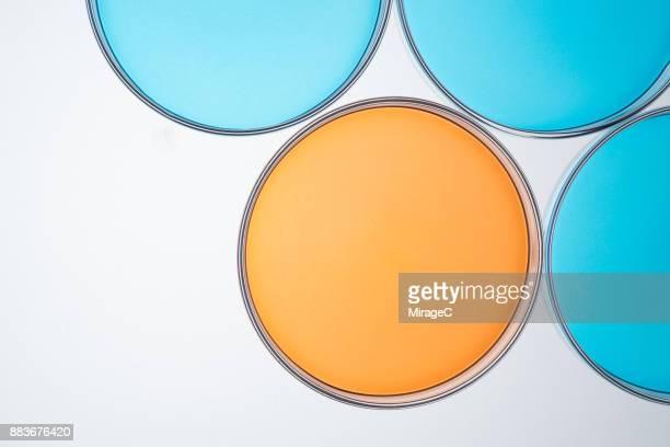 Petri Dishes Comparison