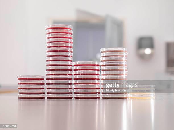 Petri dishes in laboratory