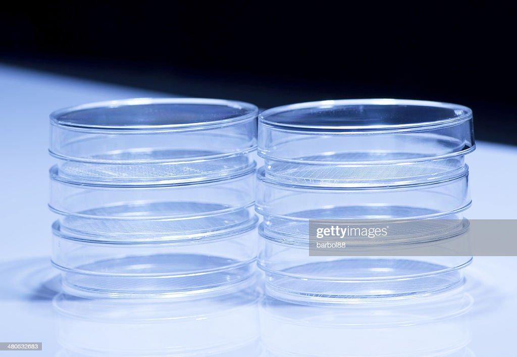 Petri dishes : Stock Photo