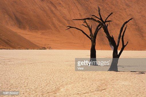 Petrified acacia trees, Namib Desert, Namibia