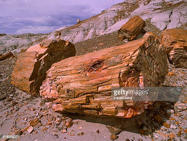 Petrified logs and trees exposed on a hillside