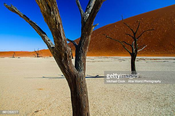 Petrified Trees, The Dead Vlei