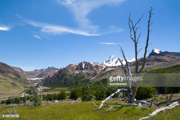 Petrified wood sits in the sun in the patagonian andes in Argentinian Patagonia, South America
