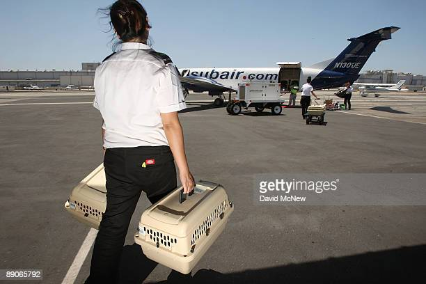 Pets are loaded for takeoff on the southern California maiden voyage of Pet Airways on July 16 2009 in the Los Angelesarea city of Hawthorne...