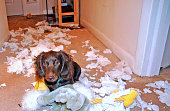 Pets Caught in the Act!