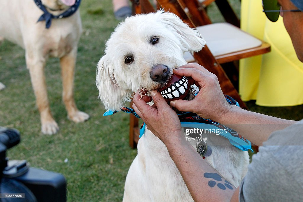 Pets enjoy the CMT One Country & Dentastix Smile! Party on June 2, 2014 in Nashville, Tennessee.